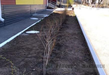 В Шахтинске высадили 30 саженцев барбариса