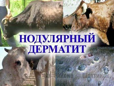 Были зарегистрированы случаи падёжа крупного рогатого скота