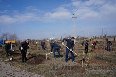 Весной планируется посадить почти 600 саженцев деревьев
