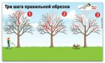 Как вернуть деревьям былую силу