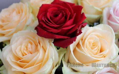 Эффективное средство для защиты роз