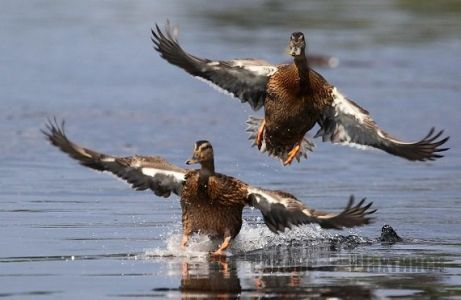 В Карагандинской области продлен запрет на весеннюю охоту