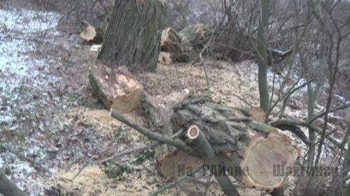 Вырубка лесопосадки в Шахтинске
