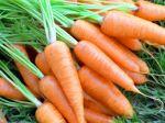 Уход и выращивание моркови