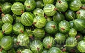 Рецепты органических настоев для борьбы с вредителями крыжовника