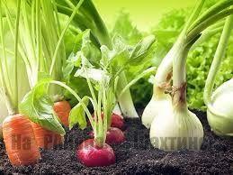 Маленькие хитрости, о которых должен знать каждый огородник!