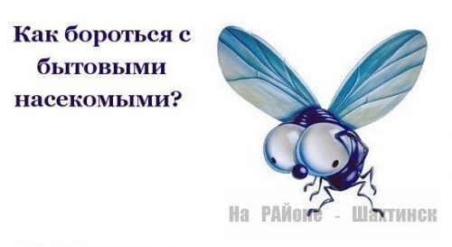 Как бороться с насекомыми дома