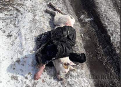 Избил сожительницу и жестоко убил ее собаку
