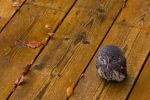 Заделываем трещины в деревянных полах