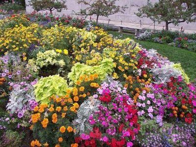 Какие цветы можно сеять под зиму?