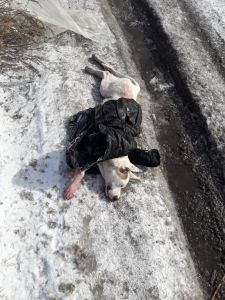 Прокуратура не привлекла к уголовной ответственности  за убийство собаки