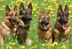 Скоро хозяева породистых собак будут платить за воду больше