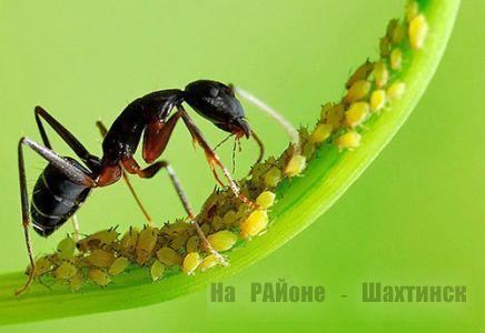 Народные средства от насекомых-вредителей и болезней
