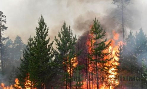 С 1 апреля за разведение костров в лесу можно поплатиться почти на 3 млн тенге