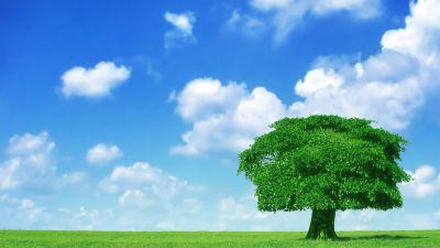 1280410667_lone-tree-lone-tree-1920x1080.jpg