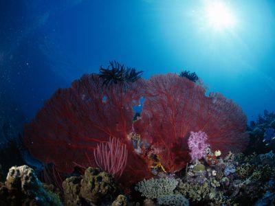 underwater_wallpaper_86.jpg