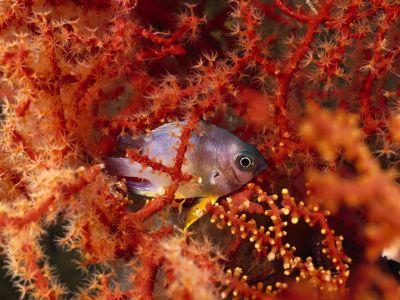 underwater_wallpaper_87.jpg